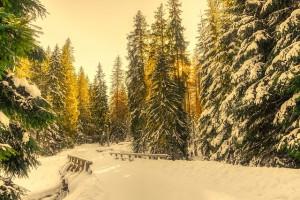 winter-2052651_640