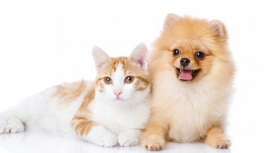 ペット保険は大事な家族を守る保険!基礎知識から選び方までを解説します!