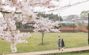 桜の花と親子