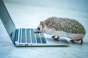 パソコンをのぞき込むハリネズミ
