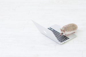 パソコンの上のハリネズミ