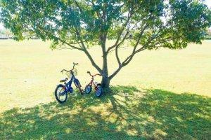 木の下にある自転車