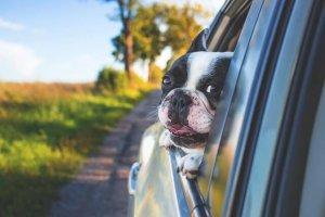 窓から顔を出す犬