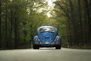並木と自動車