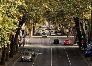 並木通りと自動車