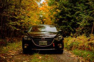 草木の中を走る自動車